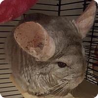 Adopt A Pet :: Buddy - Patchogue, NY