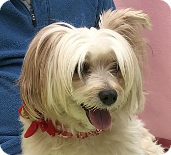 Chinese Crested Mix Dog for adoption in Evansville, Indiana - Emo