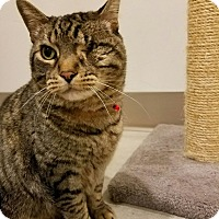 Adopt A Pet :: Mr Meowgi - Chicago, IL
