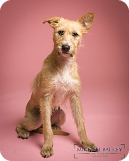 Terrier (Unknown Type, Small) Mix Dog for adoption in Bedminster, New Jersey - Sparkle - MEET ME