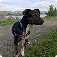 Adopt A Pet :: Arya - Clayton, CA