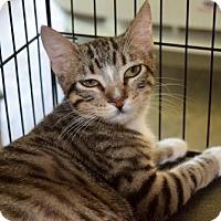 Adopt A Pet :: Buffin - Hammond, LA