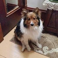 Adopt A Pet :: Yogi - Pittsburgh, PA