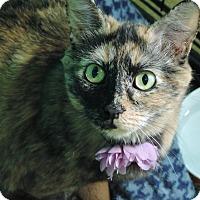 Adopt A Pet :: Zelda - Brookings, SD