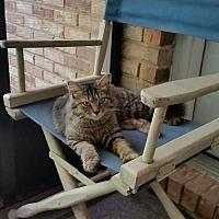 Adopt A Pet :: Porsche - Crestview, FL