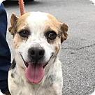 Adopt A Pet :: Buster A