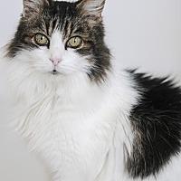 Adopt A Pet :: Aubrey - San Francisco, CA