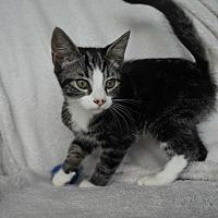 Adopt A Pet :: Thing Two - Lakeland, FL