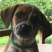 Adopt A Pet :: Green - Spring Valley, NY