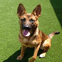 Adopt A Pet :: DALLAS - Toronto, ON
