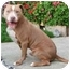 Photo 2 - American Pit Bull Terrier Mix Dog for adoption in Berkeley, California - Nino