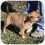 Photo 3 - Terrier (Unknown Type, Medium) Mix Puppy for adoption in Marion, Arkansas - Anna-PENDING