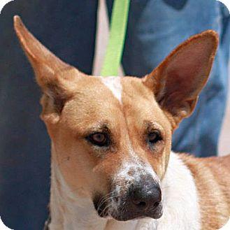 Australian Cattle Dog Mix Dog for adoption in Berkeley, California - Cypress
