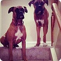 Adopt A Pet :: Tyson - Sunderland, MA