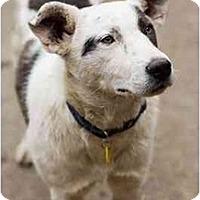 Adopt A Pet :: Mars - Portland, OR