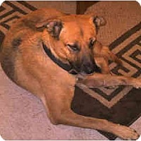 Adopt A Pet :: Rockstar - Scottsdale, AZ