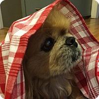 Adopt A Pet :: Henry - Richmond, VA