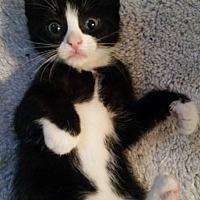 Adopt A Pet :: Juniper - Ocala, FL