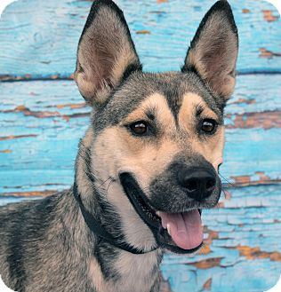 Shepherd (Unknown Type) Mix Dog for adoption in LAFAYETTE, Louisiana - WILLOW