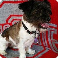 Adopt A Pet :: Oliver Turner - Urbana, OH
