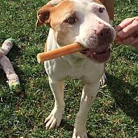 Adopt A Pet :: NEWMAN - Valley Village, CA