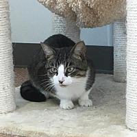 Adopt A Pet :: Tank - Harrisville, WV