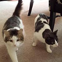 Adopt A Pet :: Freddy & Petey - Brantford, ON