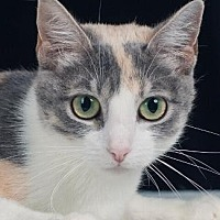 Adopt A Pet :: FRANCESCA - Pt. Richmond, CA