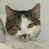 Adopt A Pet :: Ace - Woodstock, IL