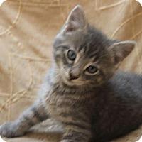Adopt A Pet :: Shawn - Crossville, TN