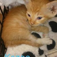Adopt A Pet :: Kazoo - Greenville, KY