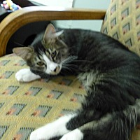 Adopt A Pet :: Zorro - Quincy, CA