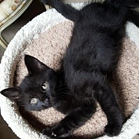 Adopt A Pet :: Virginia - Bloomington, IL