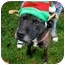 Photo 2 - American Pit Bull Terrier Mix Dog for adoption in WARREN, Ohio - Hogan