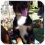 Photo 3 - Entlebucher Mix Dog for adoption in Irvine, California - LUCY