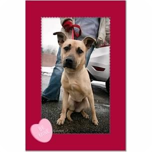 Shepherd (Unknown Type) Mix Dog for adoption in Youngstown, Ohio - Summer ~ Adoption Pending