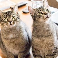 Adopt A Pet :: AJ & Seth - Chicago, IL