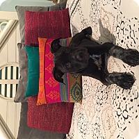 Adopt A Pet :: Luna - Orlando, FL