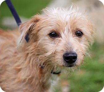 Terrier (Unknown Type, Small) Mix Dog for adoption in Jacksonville, Florida - GRANT