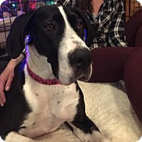 Adopt A Pet :: Molly - Broomfield, CO