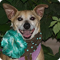 Adopt A Pet :: **BUDDY** Good Sr. Companion - Stockton, CA