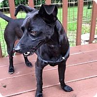 Adopt A Pet :: Randy - Brooksville, FL
