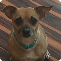 Adopt A Pet :: Tator Tot-Adoption Pending - Warwick, NY