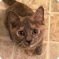 Adopt A Pet :: Stella & Luna - Richmond, VA