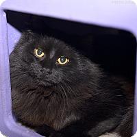 Adopt A Pet :: Hansel - Medina, OH
