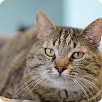 Adopt A Pet :: Tommy170378 - Atlanta, GA