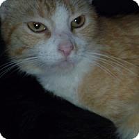 Adopt A Pet :: Dolly - Hamburg, NY