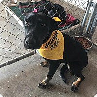 Adopt A Pet :: Boyd - Traverse City, MI