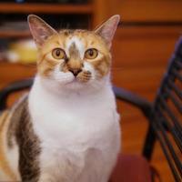 Adopt A Pet :: Winnie - Wichita, KS