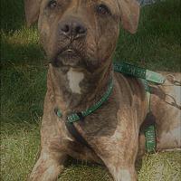 Adopt A Pet :: Jenna - Rockford, IL